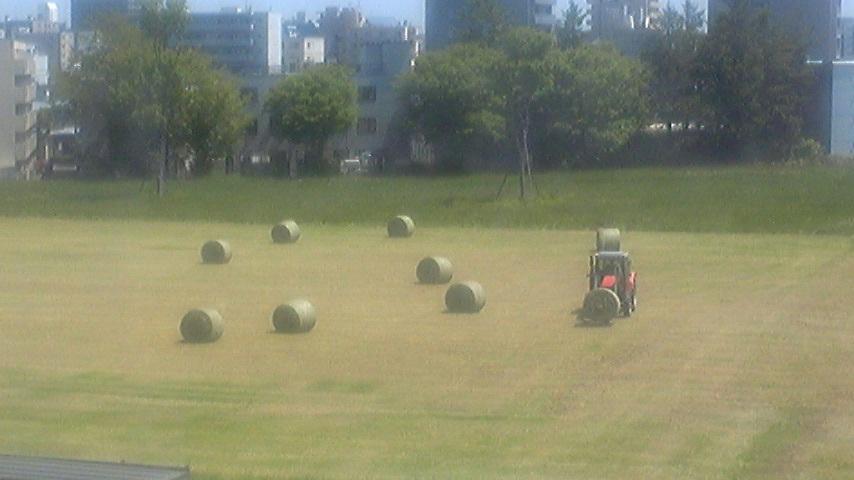 今年も干し草ロールの季節がやってきました
